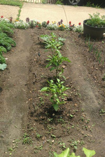 I Have a Garden!