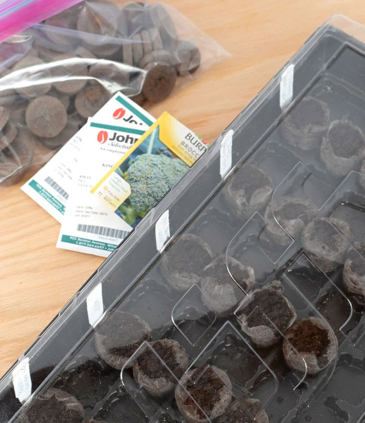 How to easily start seedlings indoors with peat pellets. This is a great way for beginner vegetable gardeners to start their seeds indoors for a great start to the gardening season! // isabeleats.com