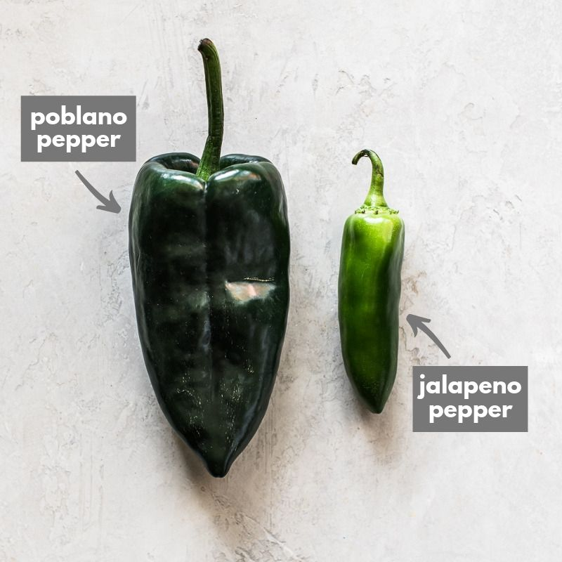 A poblano pepper next to a jalapeno pepper