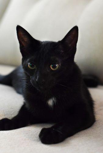 Meet Lucy, my new black kitten